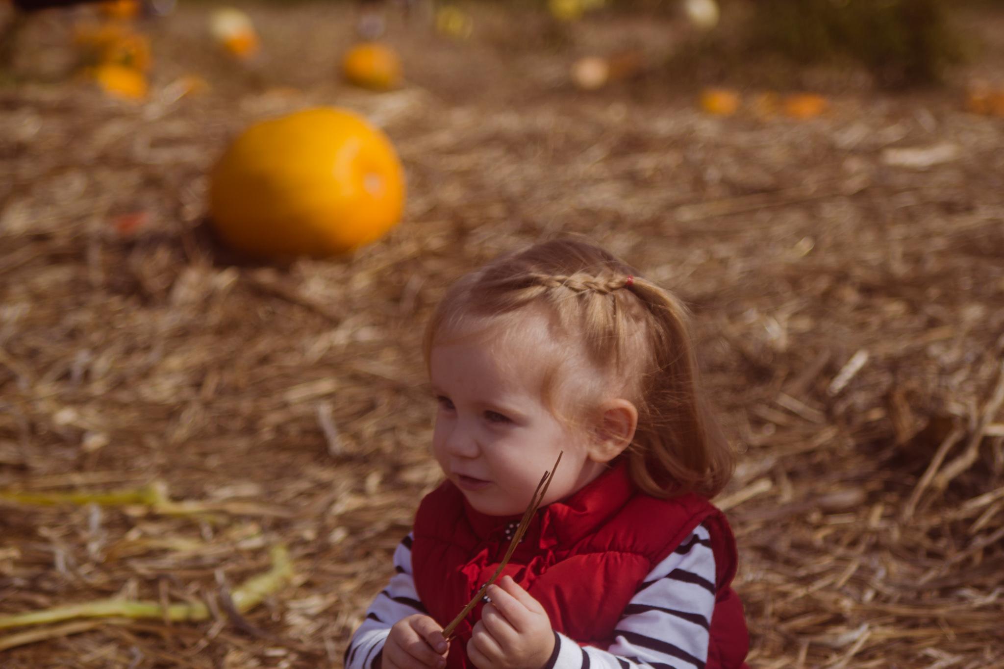 Pumpkin_Patch-2016-6