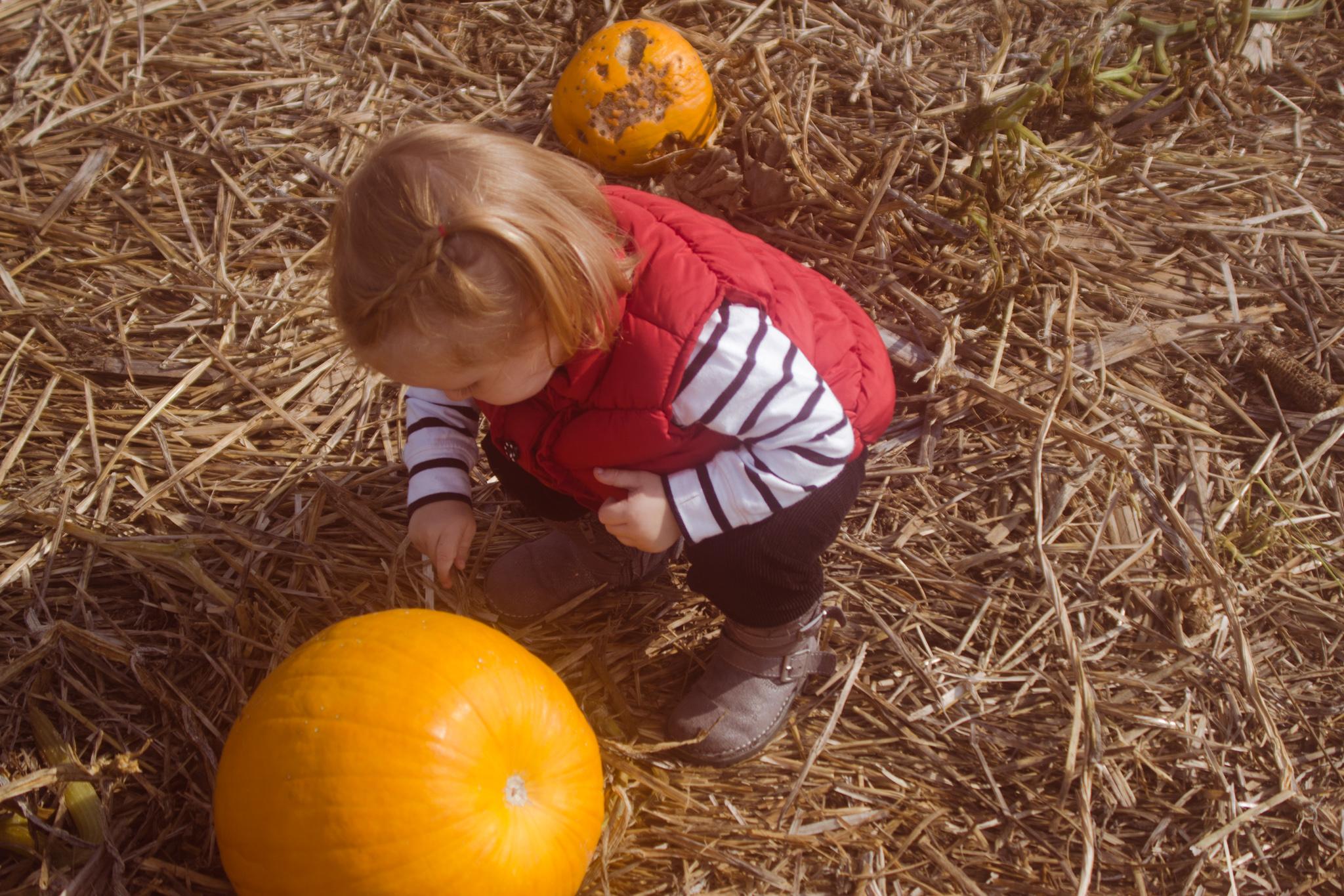 Pumpkin_Patch-2016-9